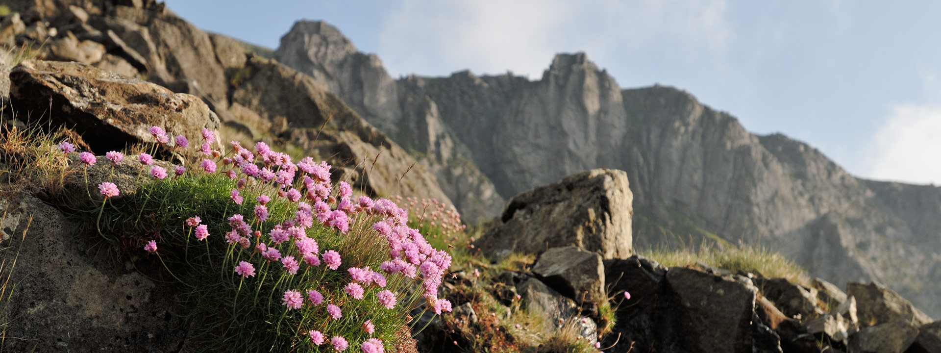 Thrift on the approach to Clogwyn Du'r Arddu. © Ray Wood